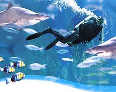 http://www.diseno-art.com/images/swim-with-sharks