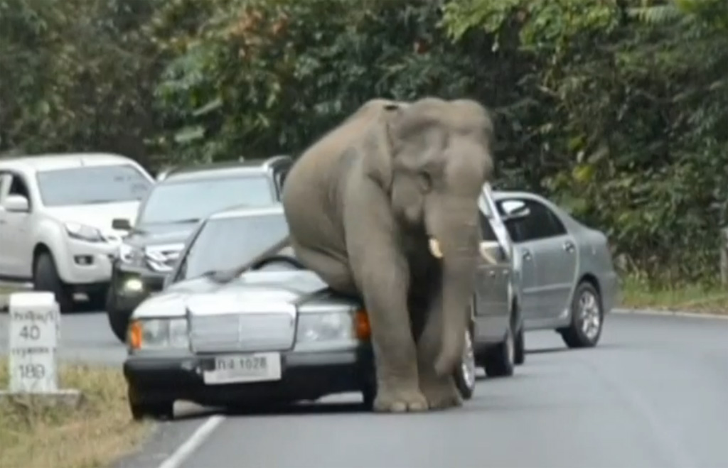 elephant sitting on a car
